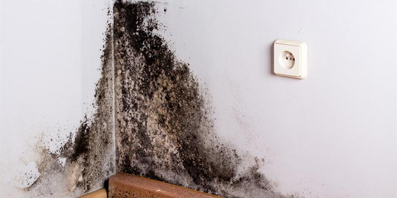 Hoe verwijder ik zwarte schimmel van mijn muur?